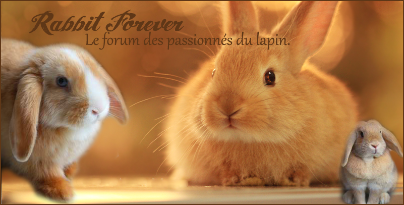 Rabbit Forever Index du Forum