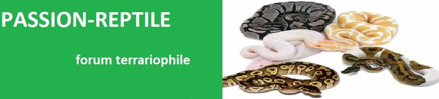 passion-reptile Index du Forum