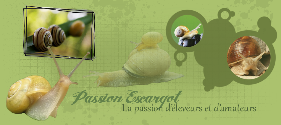 Passion Escargot Index du Forum