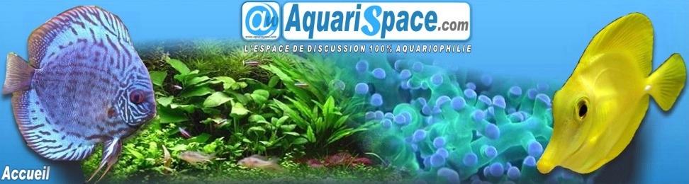 AquariSpace.com
