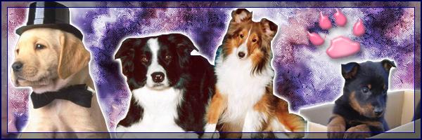 Nos amis les bêtes Index du Forum