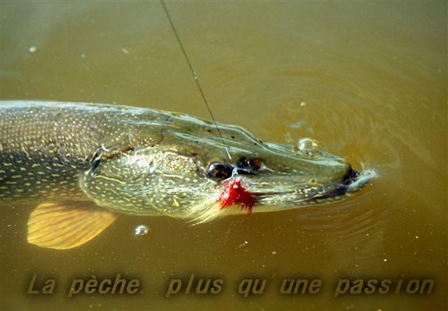 La pêche ... plus qu'une passion !!! Index du Forum