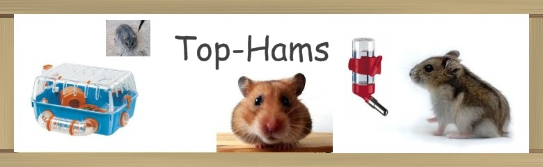 top hams Index du Forum